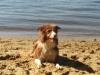 Wasser, Sand und Elbe, ....