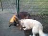 Yuma auf dem Hundeplatz