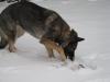 Yuma im Schnee